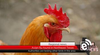 avian.png
