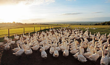 bird-flu-avian-influenza-duck-farm-thousands-culled-south-korea-china-news-latest-1269096.jpg