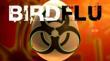bird+flu+generic_33620271_ver1.0_640_480.jpg